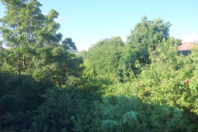 The verdant and forgotten land next to Kirkdale station