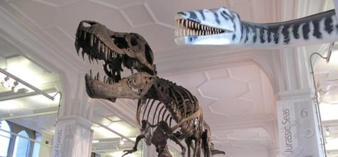 T. Rex in Manchester Museum