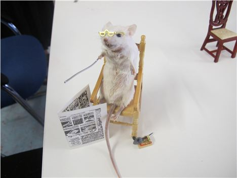 Geriatric mouse