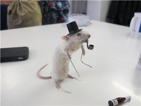 Dapper mouse